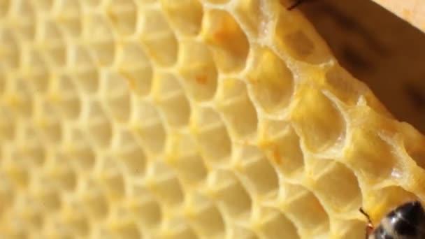 közeli kép: a méh csúszó lépek át egy fából készült keret. Méhek a méz betesz lépek. Mezőgazdasági, méhészeti koncepció