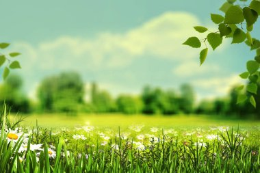 Summertime natural background with meadow, grass and wildflowers.