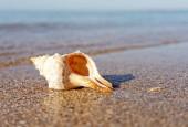 Sommerurlaub Hintergründe mit Meeresoberfläche, schönen Sand und Wa