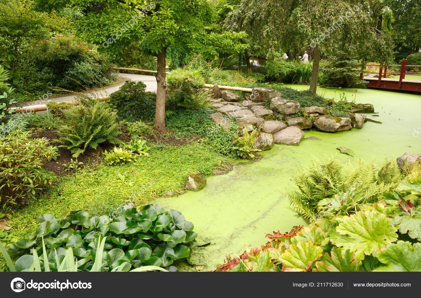 Japanese Garden Pond Bridge Trees U2014 Stock Photo