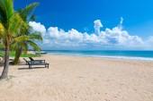 Malebný pohled písčité pláže s palmami a tropického moře