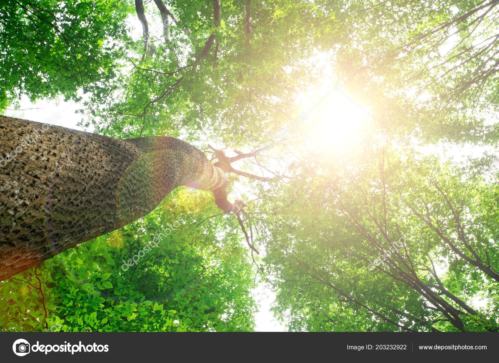 Sfondo Cellulare Natura Verde Alberi Della Foresta Sfondi Natura