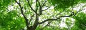 lesní stromy. přírodní zelené dřevo slunečnímu záření pozadí