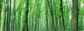lesní stromy. příroda zelené dřevo slunce pozadí