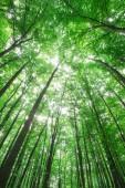 Fotografie lesní stromy. přírodní zelené dřevo slunečnímu záření pozadí