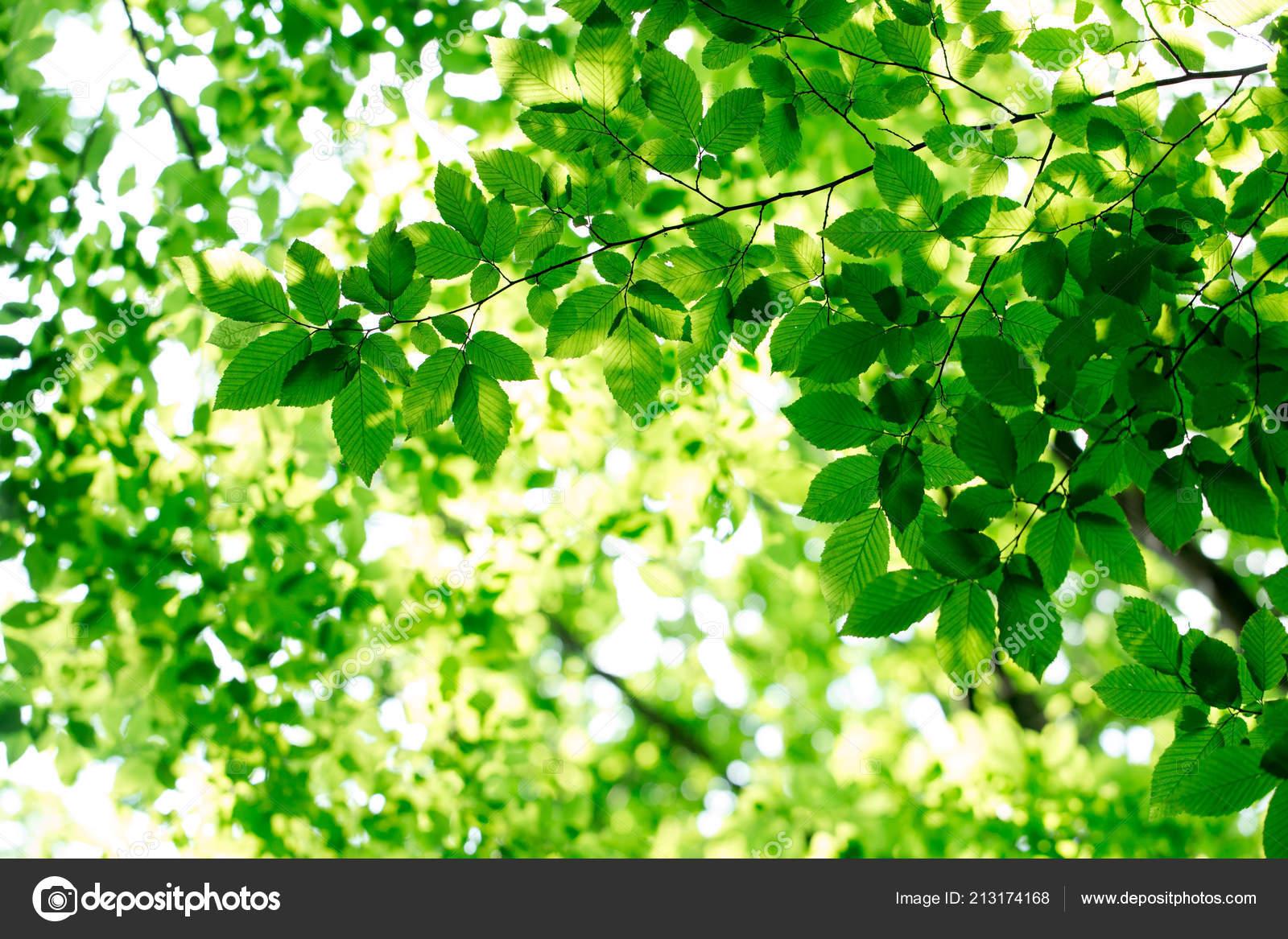 Immagini Foglie Sfondi Foglie Verdi Sfondi Verde Foto Stock