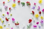 Fotografie kleine bunte Blumen Hintergrund. flache Lage