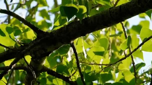 Léto v listnatý les. Slunce hraje v listech břízy