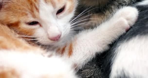 Niedliche Kätzchen schlafen miteinander