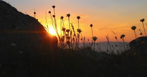 Divoká tráva se vznášel před Ocean Sunset s Rock na popředí