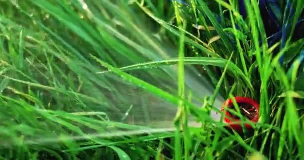 Vedoucí automatický zavlažovací systém hluboko v trávníku travní pracovní