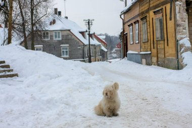 Winter in town. Cesis, Latvia.