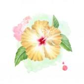 Akvarell illusztrációja Hibiszkusz virág