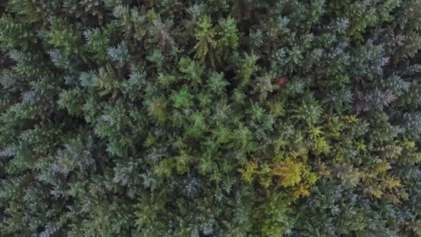 Pohled ze zelených stromů v lese. Letecký snímek pořízený s bordunem smrků a modřínů, jehličnany stromy, vytvoření vzorku pozadí. Příroda a outdoor pojmy