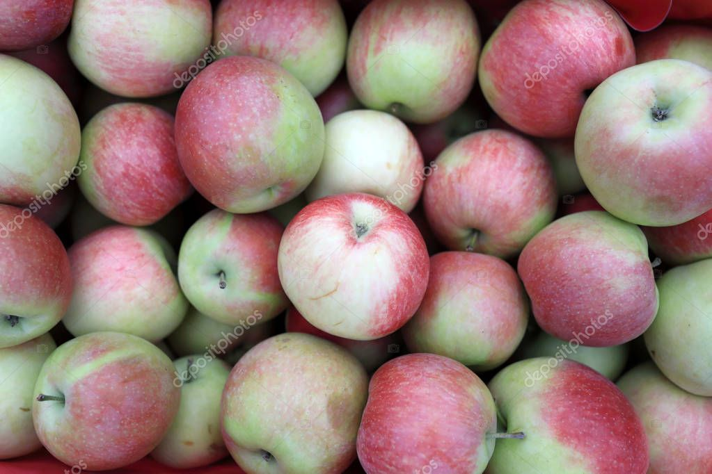 iol apples asian supplier - 1023×682