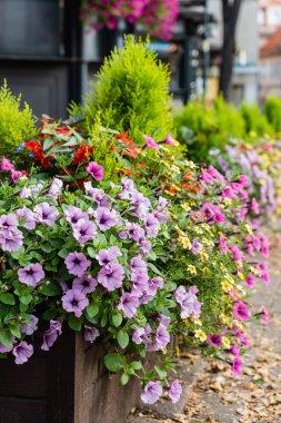 Flower Pot Gardening. Flora