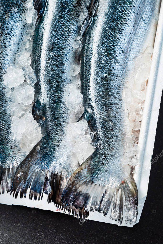 raw salmon fish on the ice