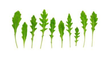 Rucola (Rughetta, Arugola, Ruccola) leaves isolated on white