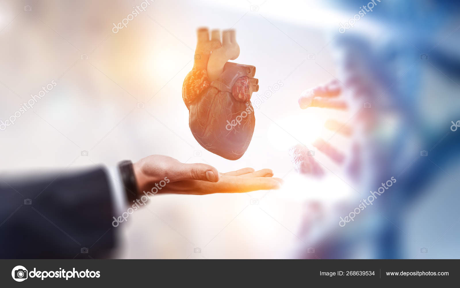 Man s hands showing anatomical heart model  — Stock Photo