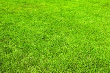 Nature green grass background, trimmed lawn stock vector