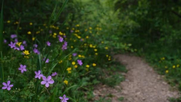 Lesní cesta přes zelené stromy v jarním lese Cesta procházející divokými květy