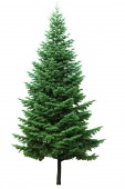 Fotografie Christmas tree, isolated on white  background. Fir tree without decoration.