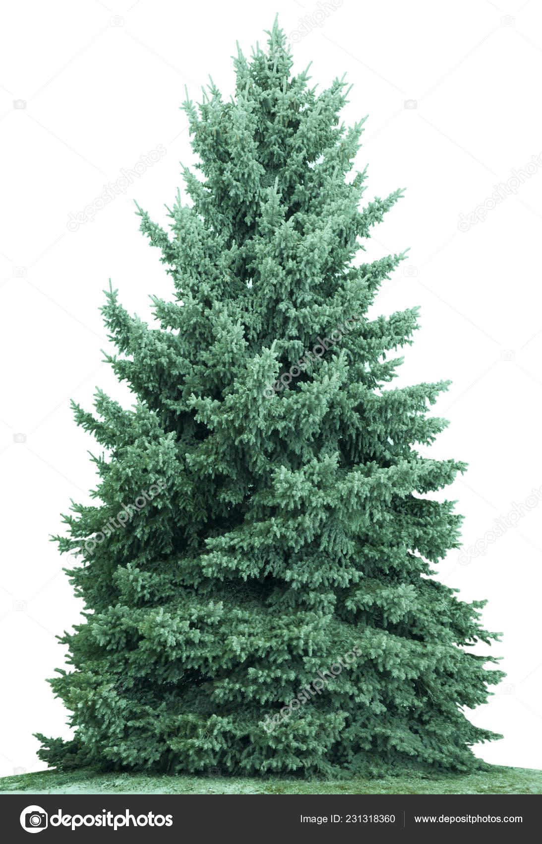 Weihnachtsbaum ohne hintergrund