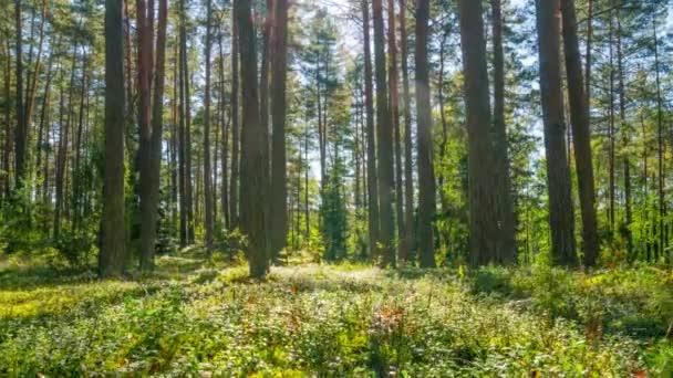 Borový les, časosběrné s jeřábem