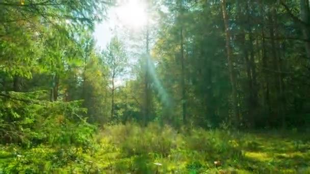 Kouzelný les a muchomůrky, 4k time-lapse s jeřábem