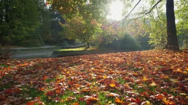 Arany ősz ősz a híres müncheni pihenőhelyen - angol. Angol kert lehullott levelekkel és arany napfénnyel októberben. A természet élénk színei. Munchen, Bajorország, Németország