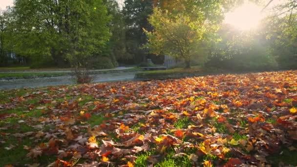 Golden autumn fall October in famous Munich relax place - Englishgarten. English garden with fallen leaves and golden sunlight. Munchen, Bavaria, Germany