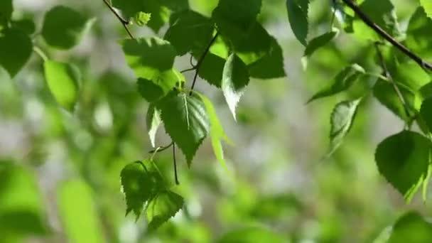 Sunny zelené listy