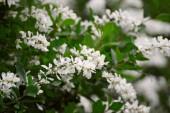 bílé květy na jaře