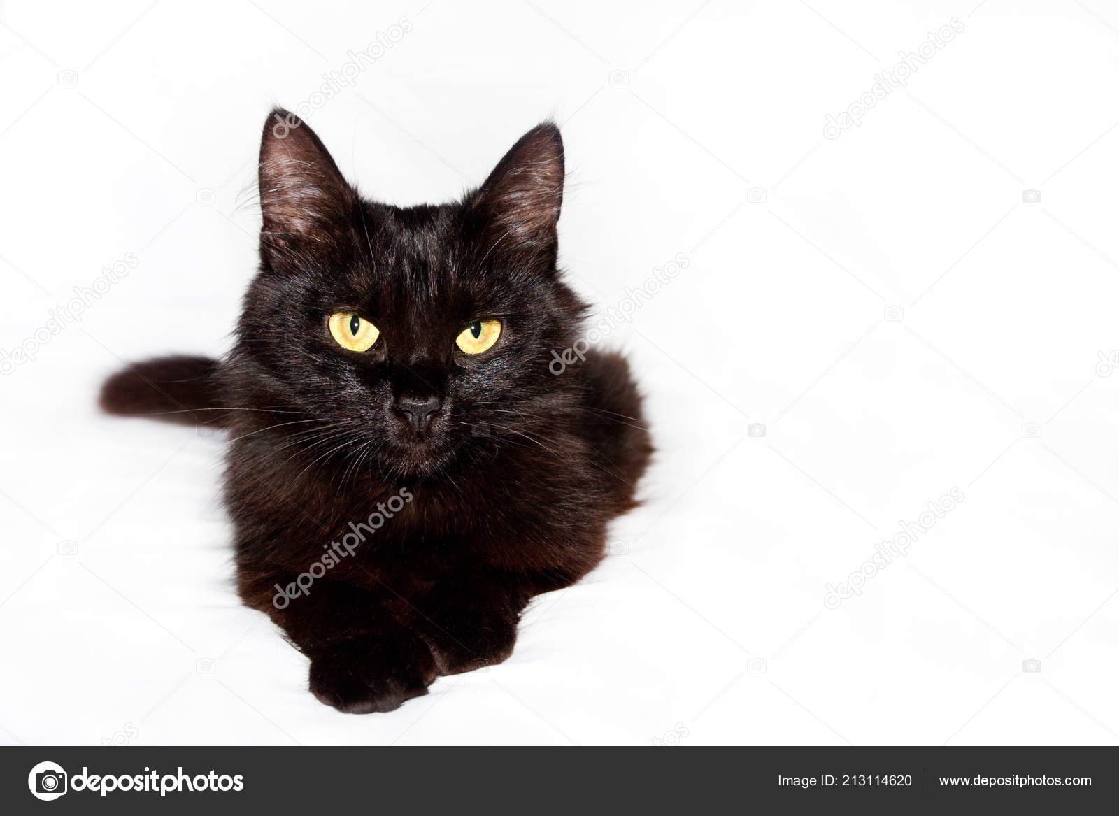 krásná černá chlupatá kočička