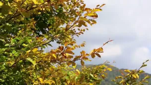 Golden őszi levelek, integetett a szél. Színes levelek. Fák őszi erdőben. Őszi jelenet footage
