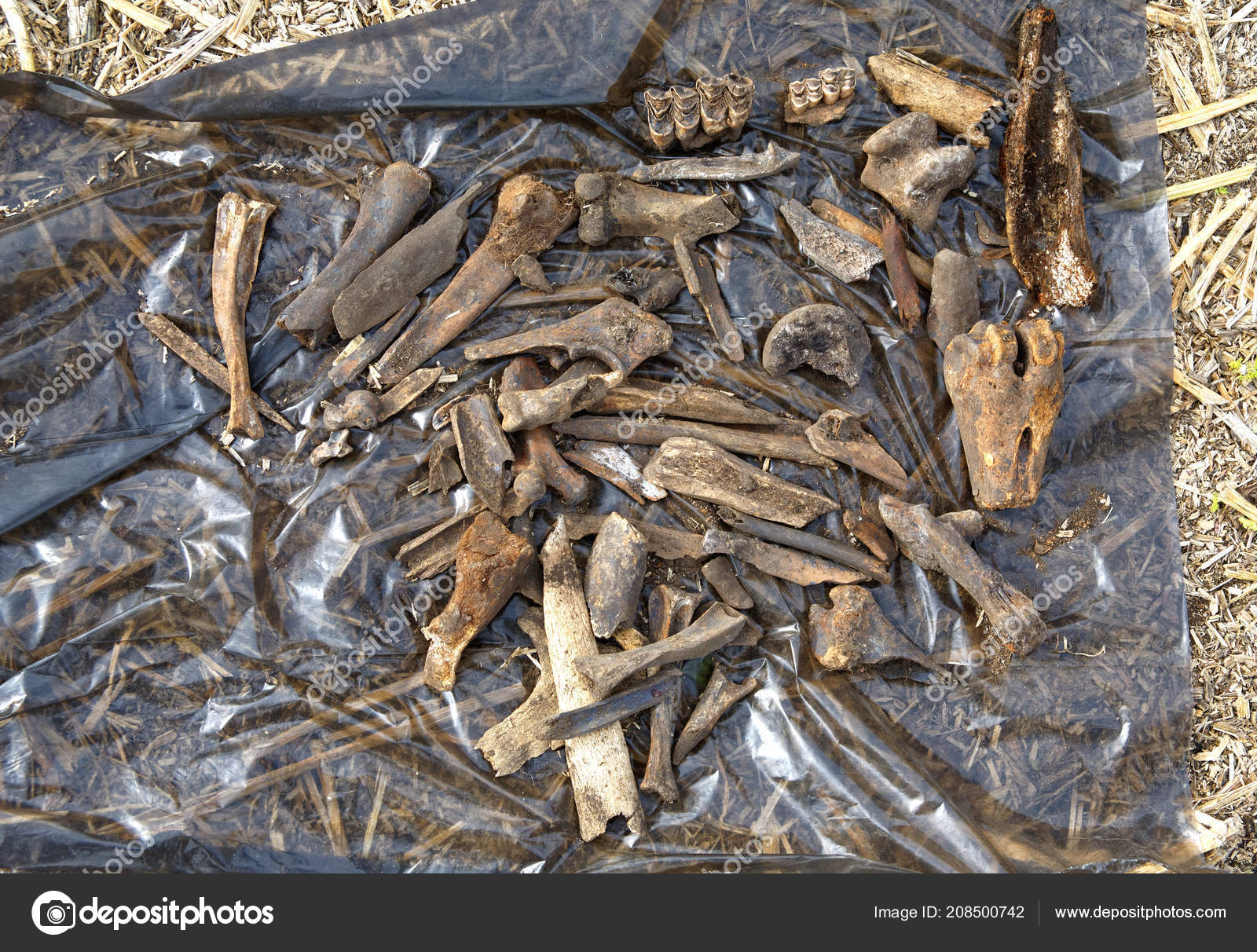 Interesting archaeological finds in Siberia