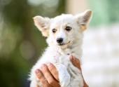mongrel white puppy