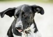 Fotografie portrét toulavého psa