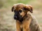 kříženec štěně sedící na trávě
