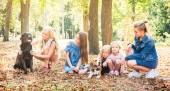 Fényképek Kis gyerekek, és a lány ül a kutyák a parkban