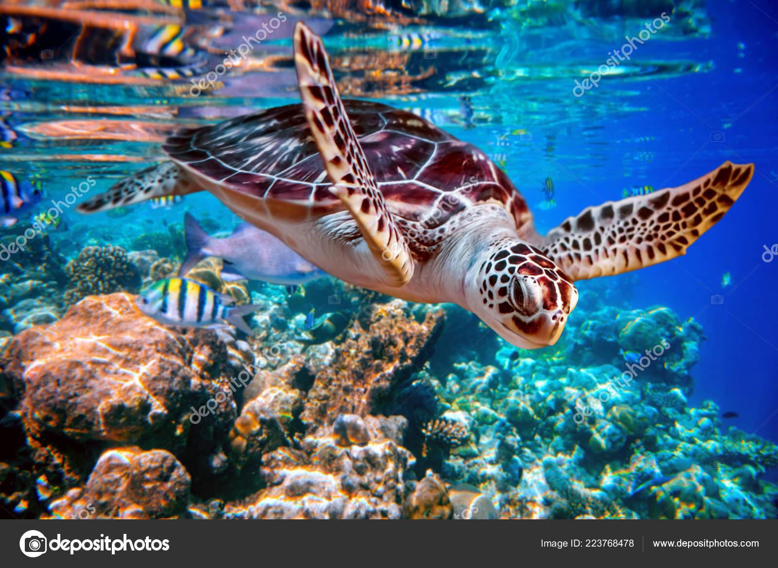 Sfondi mare barriera corallina
