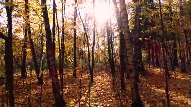 Barevné podzimní dřevo