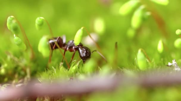 Ant close-up in the wild.