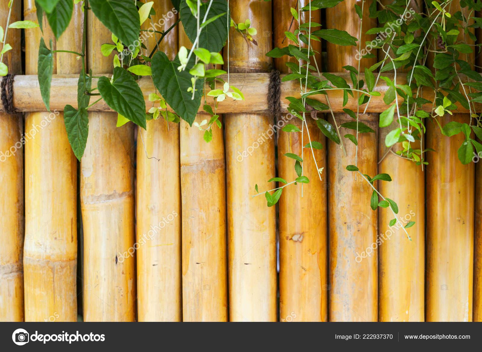 Design Hintergrund Japanischen Bambusgarten Ost Architektur ...