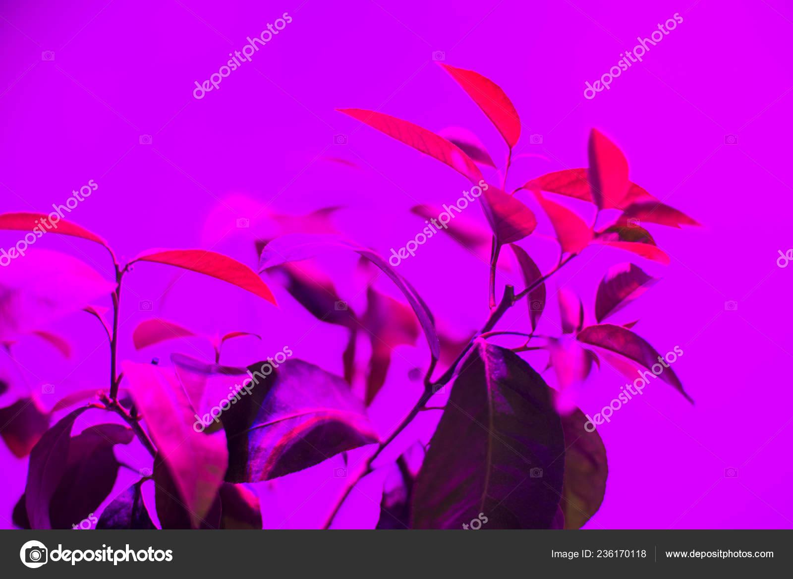 światło Led Roślin Rosną Piękne Fototapety Oświetlenie Led