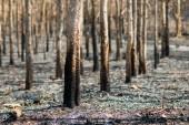 leégett erdőben
