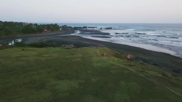 Aerial view of a green hill with grazing cows, black sand beach at sunset