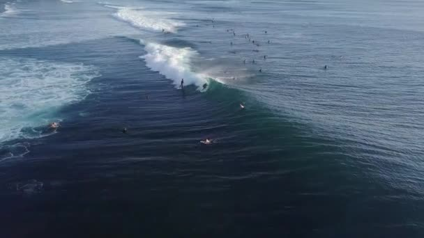 Aerial view of group of surfers in the ocean.