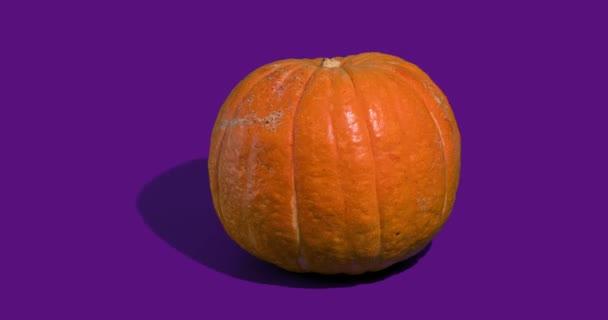 Halloween dýně nebo Jack oLantern