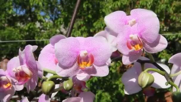 Gyönyörű orchidea virágok virágzó a kertben.